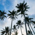 ENIDP_PalmTrees.jpg
